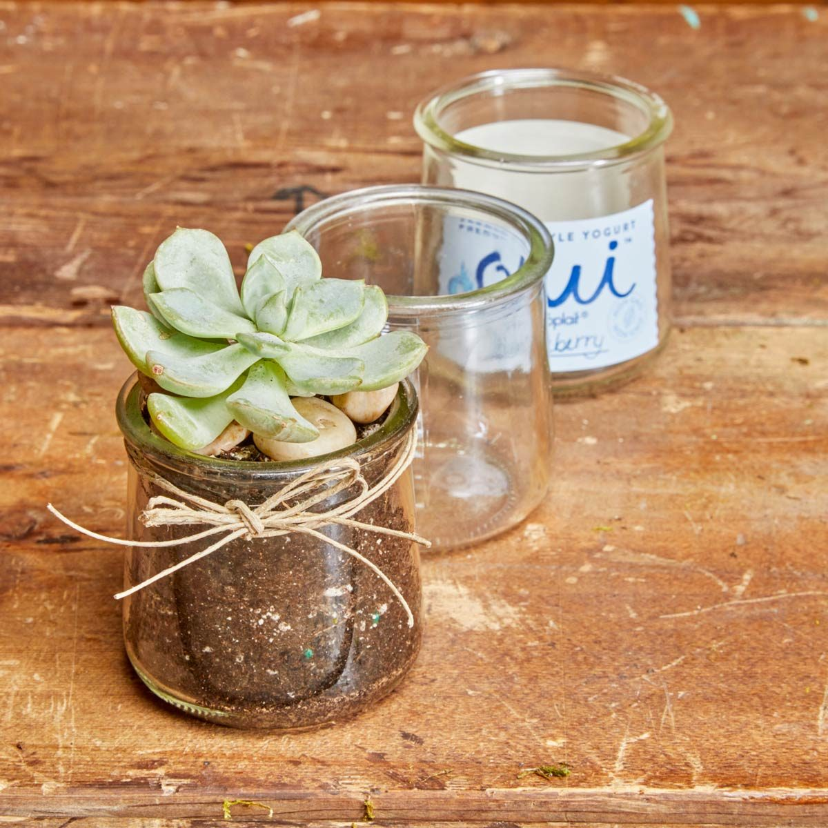 Planting Succulents In Recycled Glass Jars Diy Family Handyman