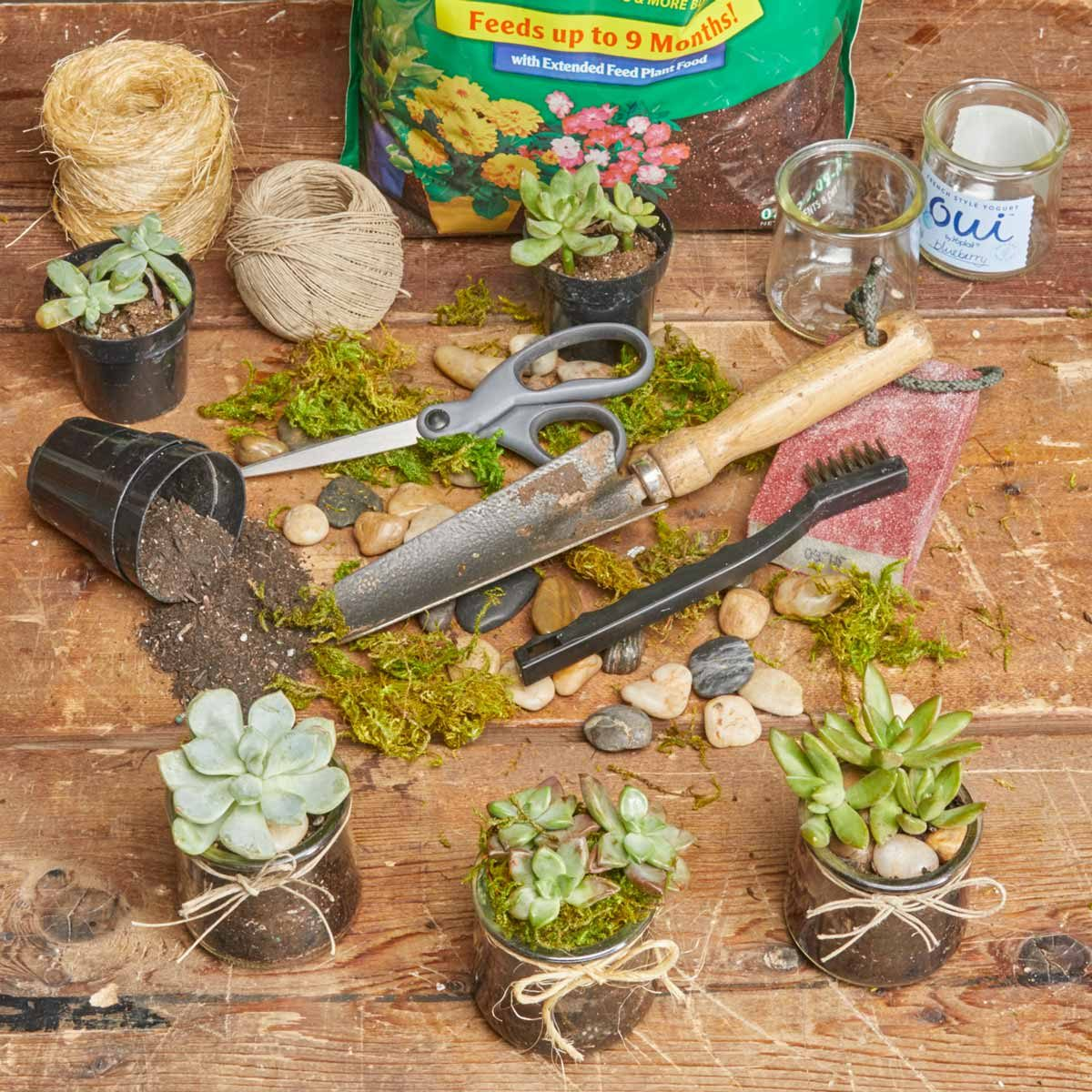 supplies for succulents in glass jars