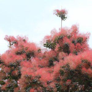 10 Flowering Shrubs You've Just Gotta Try