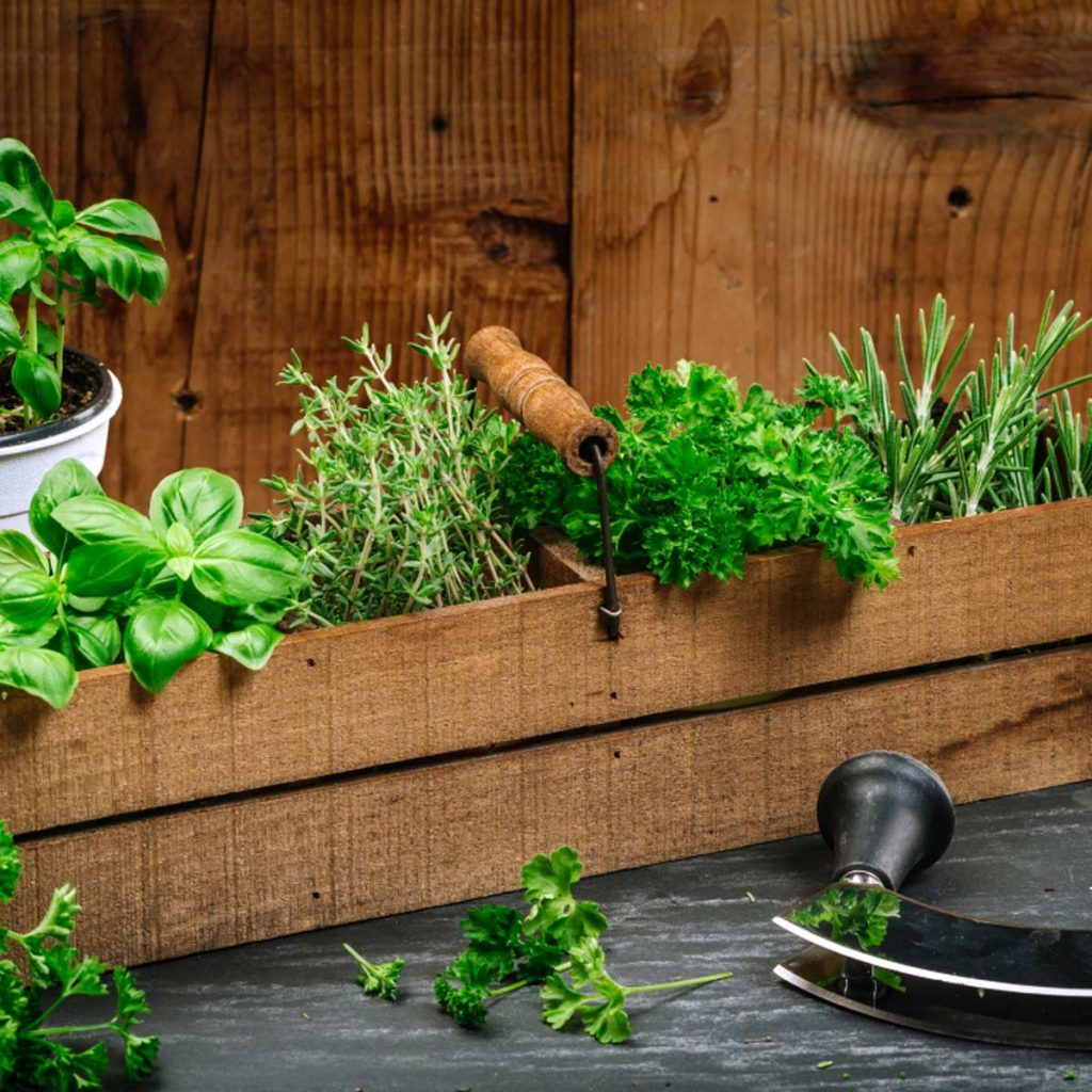 Make an Herb Garden
