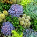 14 Tips for Planting Succulents Outdoors