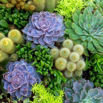 Mosaic succulents