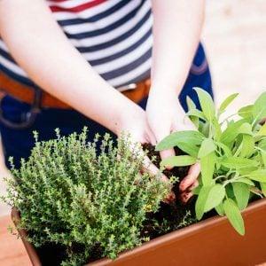 10 Balcony Gardening Tips