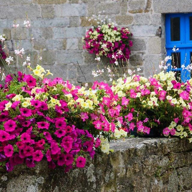 Sunny Balcony Garden