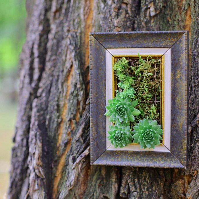Picture frame on tree