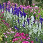 10 Wildflowers That Do Well in the Suburbs
