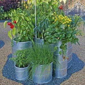 A Dozen Vegetables You Can Grow in Pots