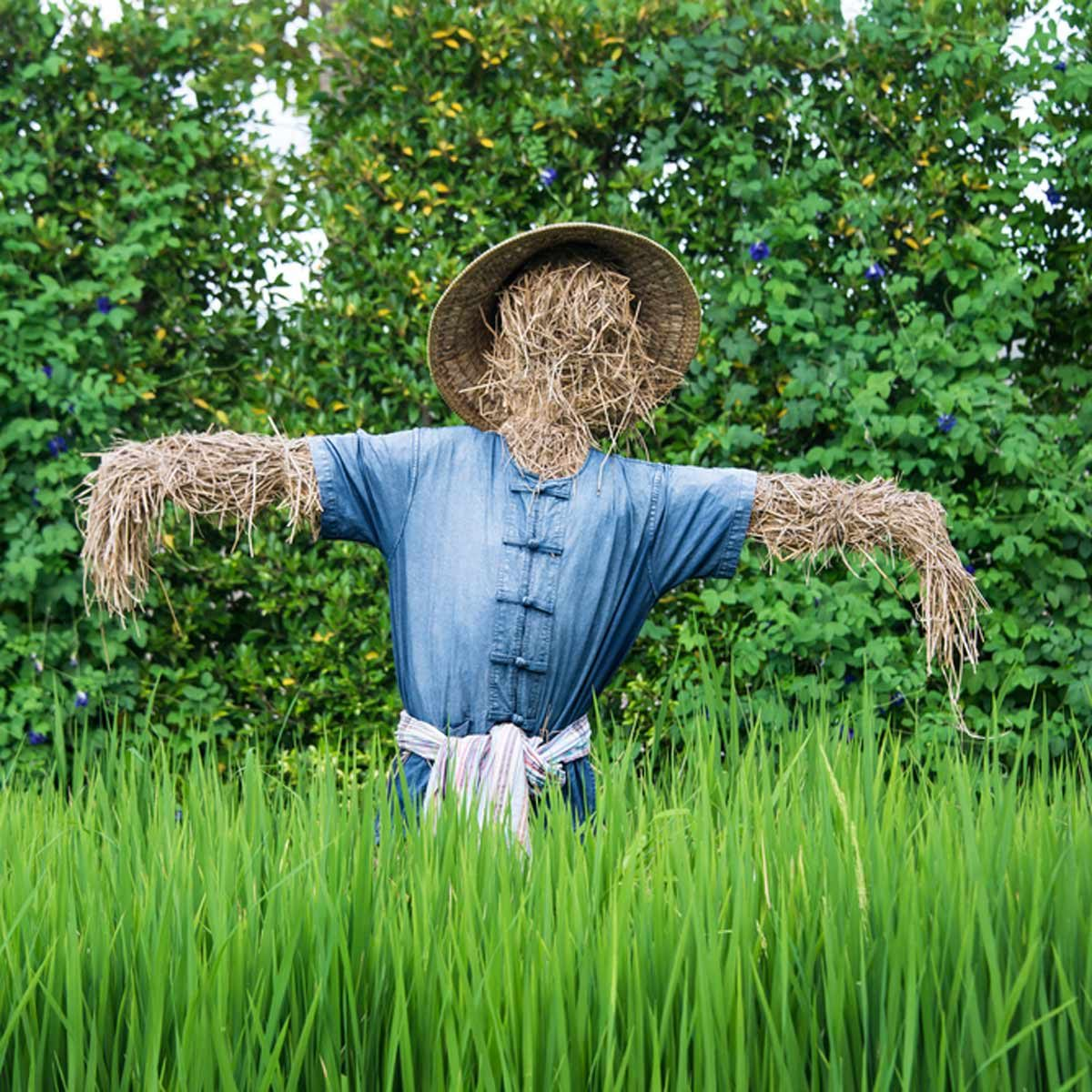 13 Amazing Scarecrows The Family Handyman