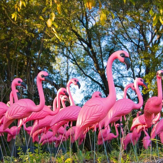 Pink Flamingos plastic tacky lawn ornaments