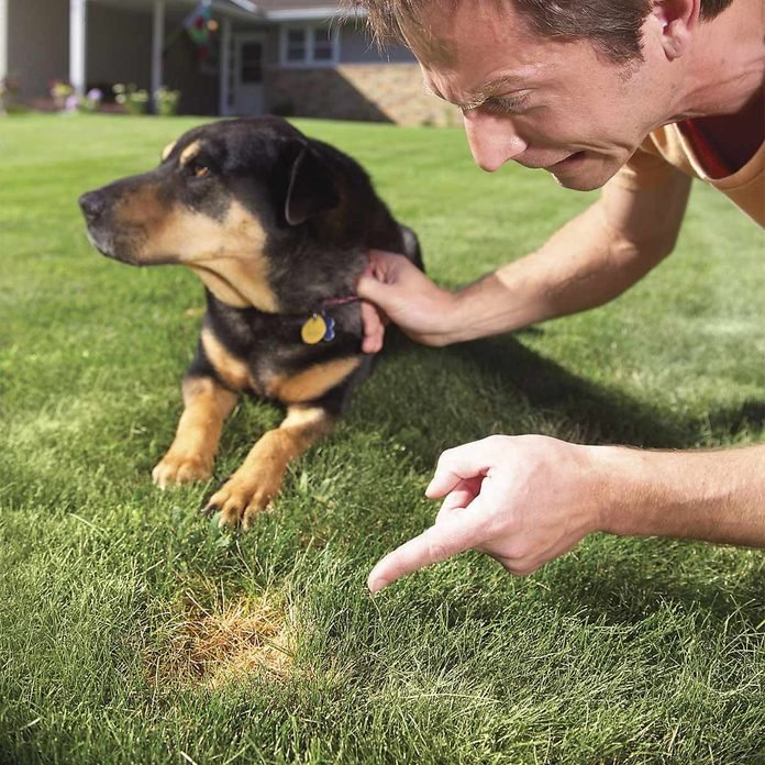 pet spots in yard