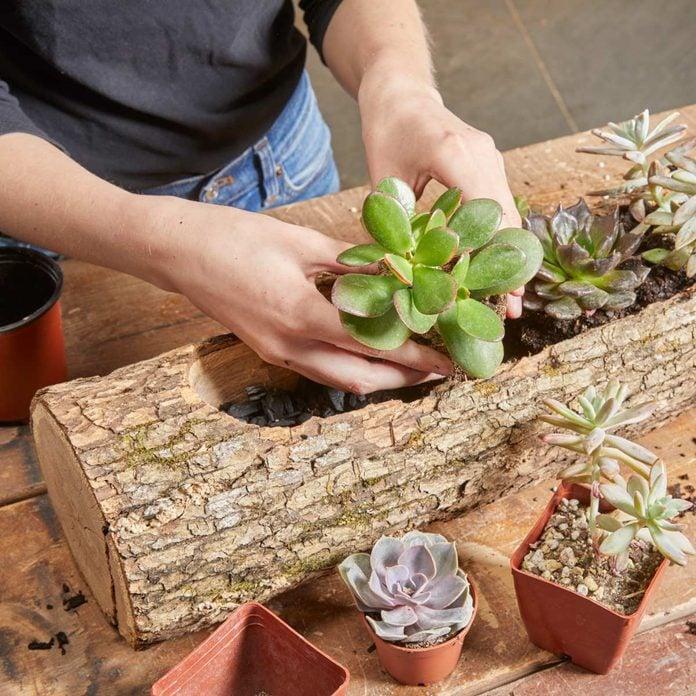 log planter planting succulents