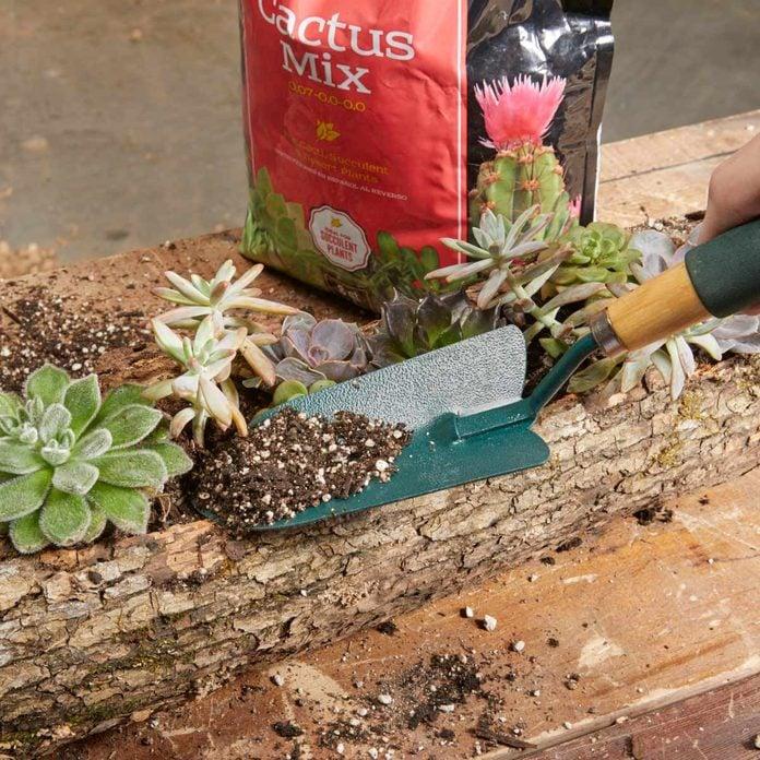 log planter cactus soil