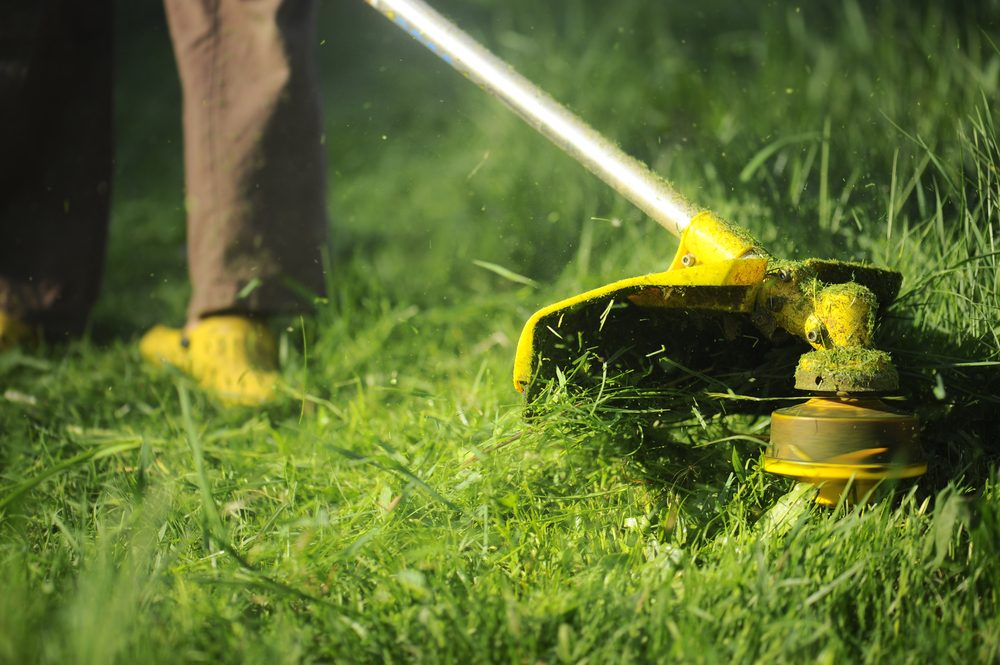 Here S Why You Need To Leave Grass Clippings On The Lawn