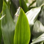 11 Houseplants That Are Invincible