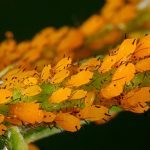10 Worst Garden Insect Pests and How to Get Rid of Bugs on Plants