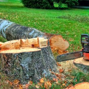 Battery-Powered Chain Saw Recommendations