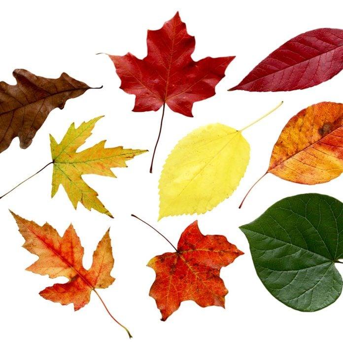 use leaves to identify tree species leaf identification