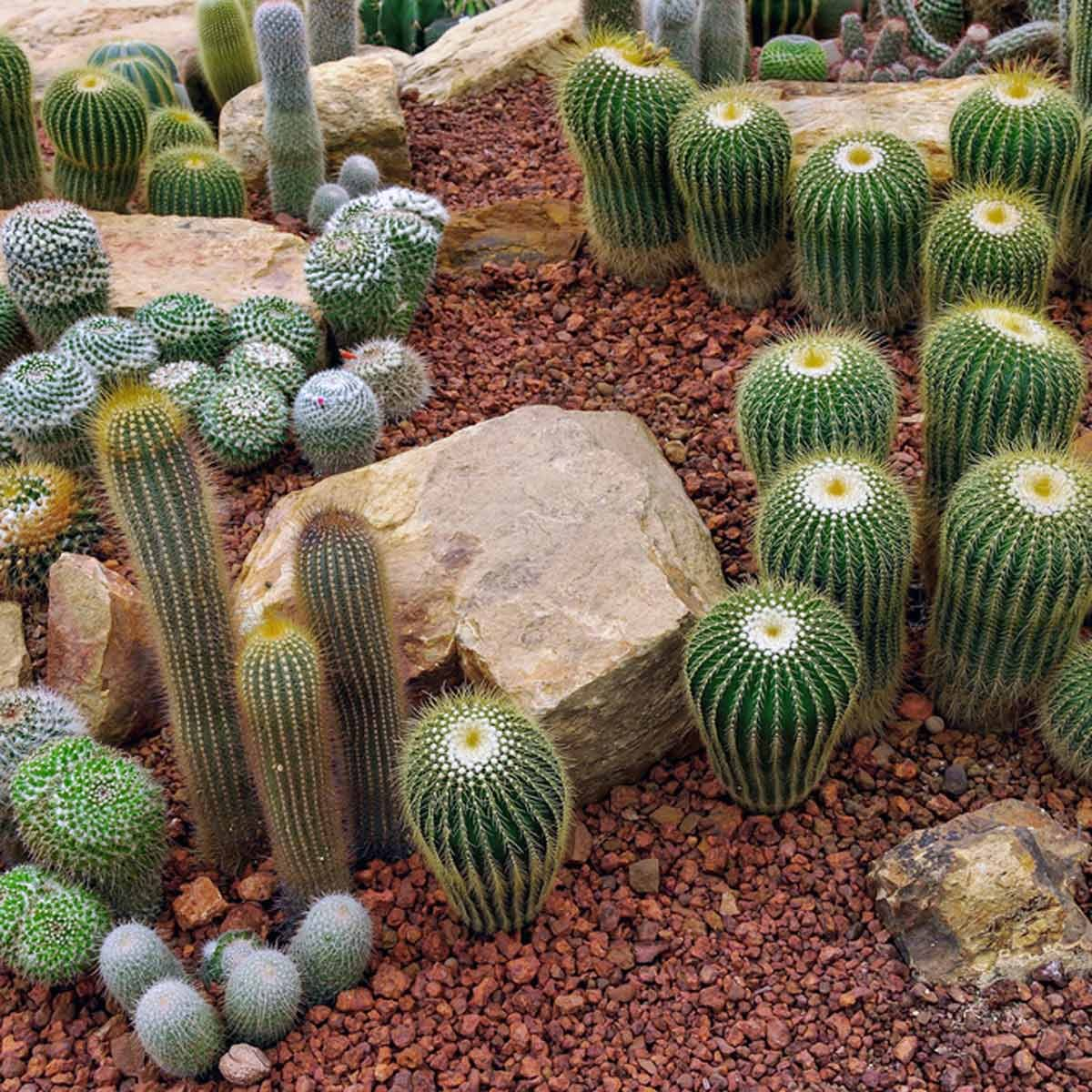 10 Outstanding Desert Landscaping Ideas Family Handyman