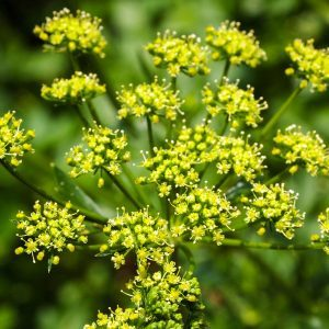 12 Plants in Your Yard That May Be Dangerous