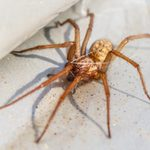 Best Ways to Get Rid of Spiders