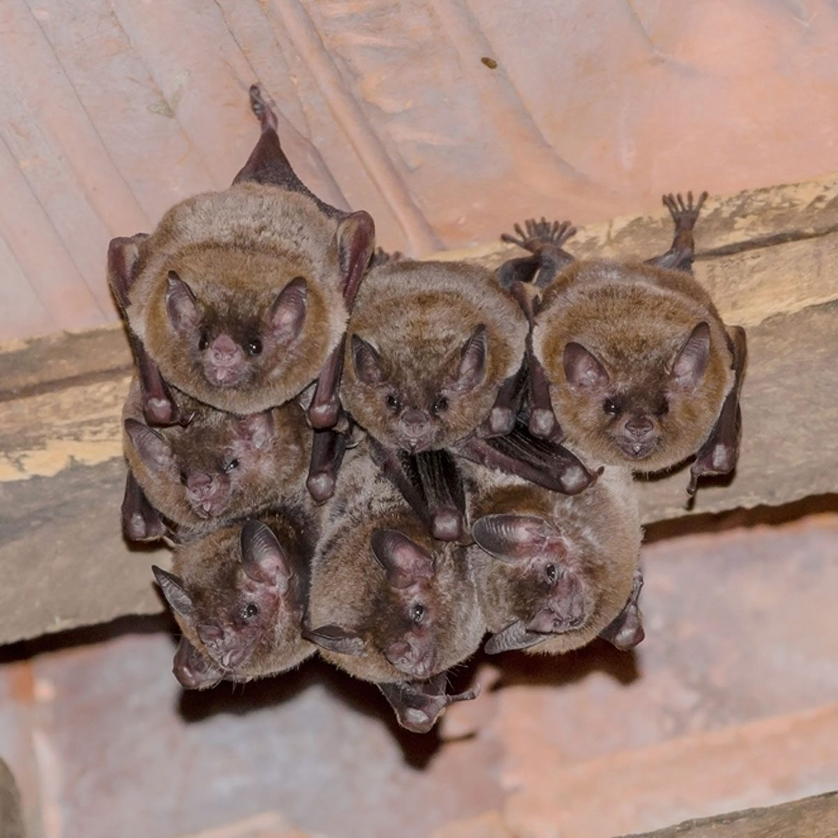 How To Prevent A Bat Problem The Family Handyman
