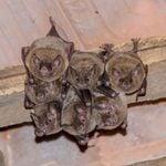How to Prevent a Bat Problem