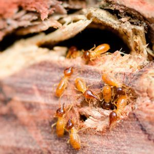 13 Secrets Termites Don't Want You to Know