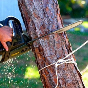 16 Things You Should NOT Do When Cutting Down a Tree