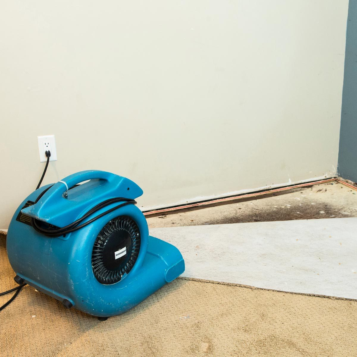 mold under carpet