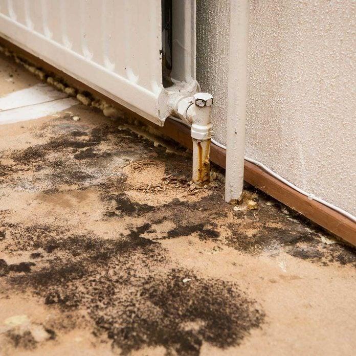 myths about mold on the floor