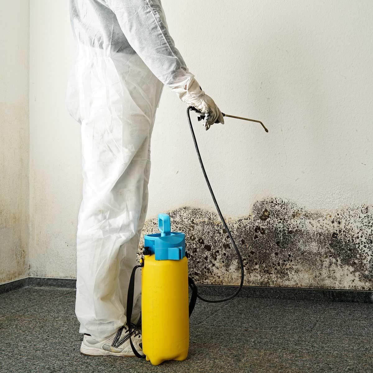 mold killing products spray