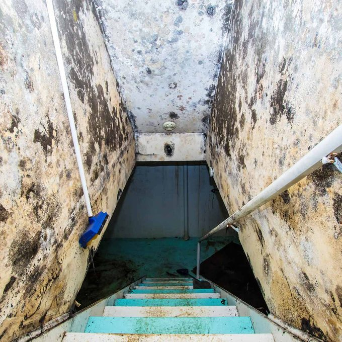 mold and mildew removal pro