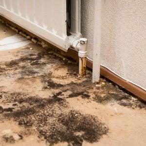 myths about mold on floor