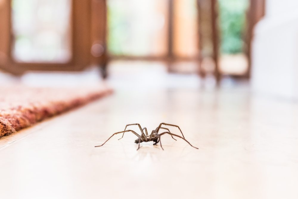 Here's Why You Should Never Kill A Spider