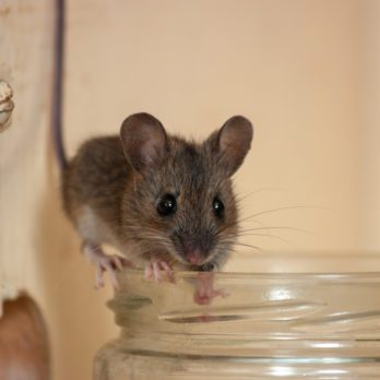 This Surprising Hack Will Keep Mice Away For Good
