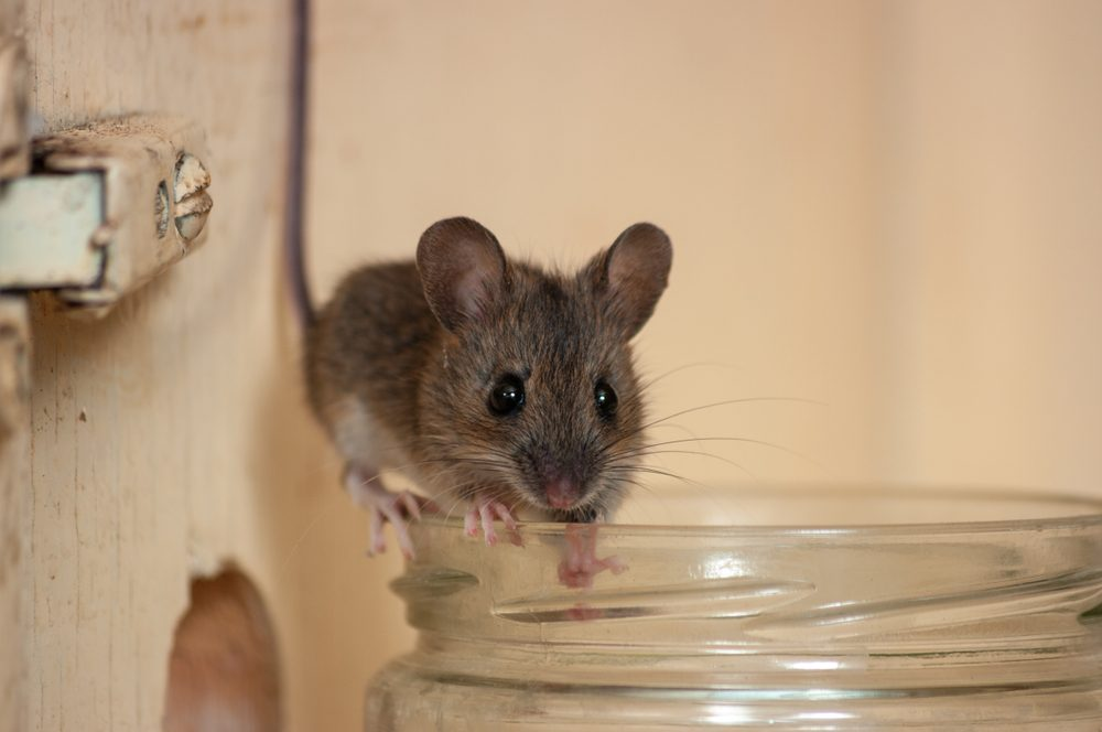 This Surprising Hack Will Keep Mice Away For Good | Family