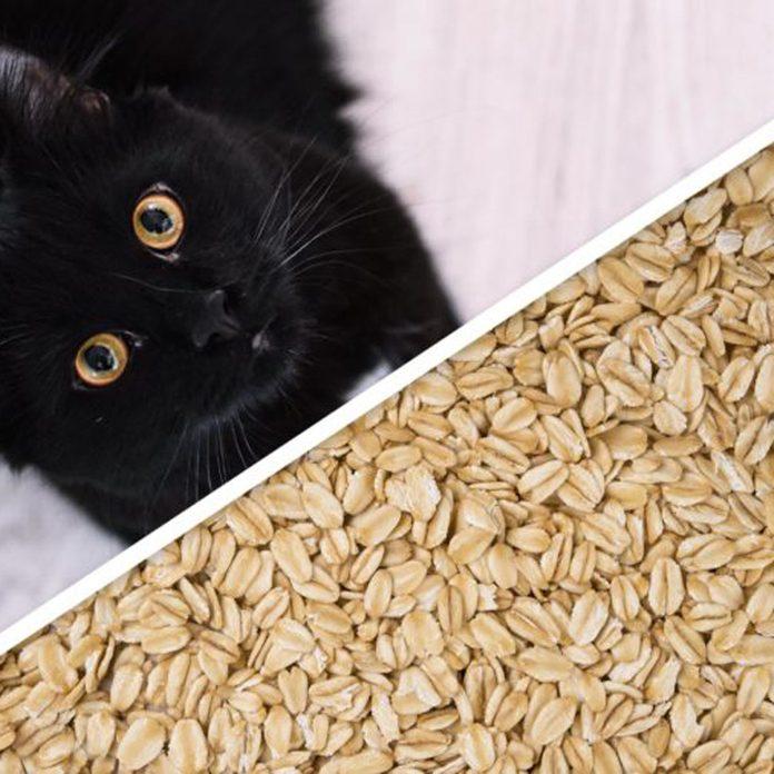 cat oats