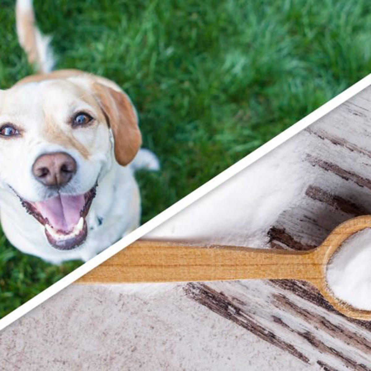 15 clever pet products you can make at home the family for Products you can make at home