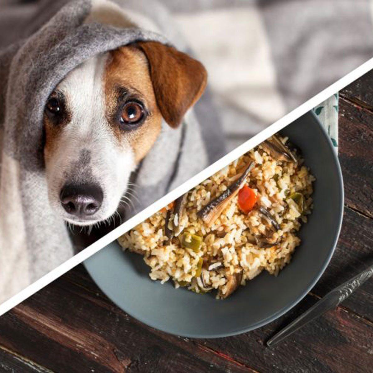 dog chicken rice