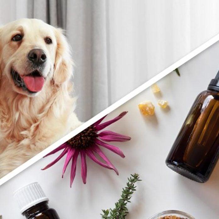 dog essential oil