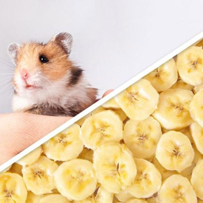 hamster banana