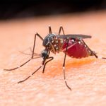 Unbelievable Hacks for Keeping Mosquitoes Away For Good
