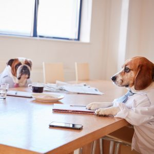 11 Adorable Pictures of Dogs Dressed for Work