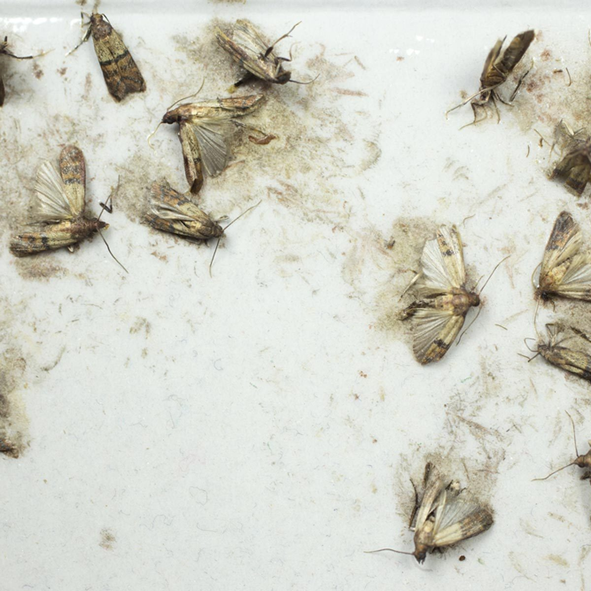 The 16 Most Disgusting House Bugs and How To Get Rid of Them