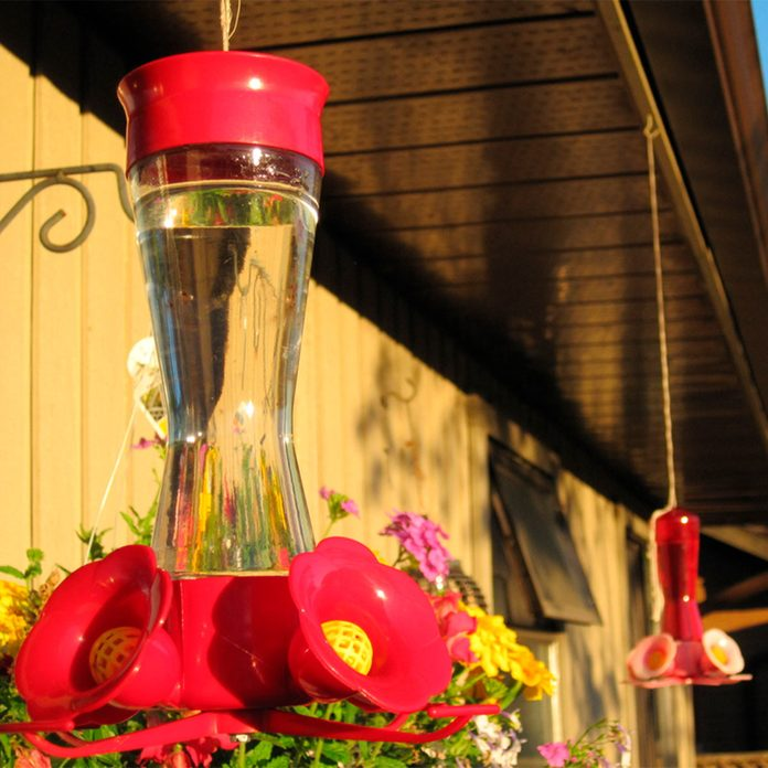 two hummingbird feeders
