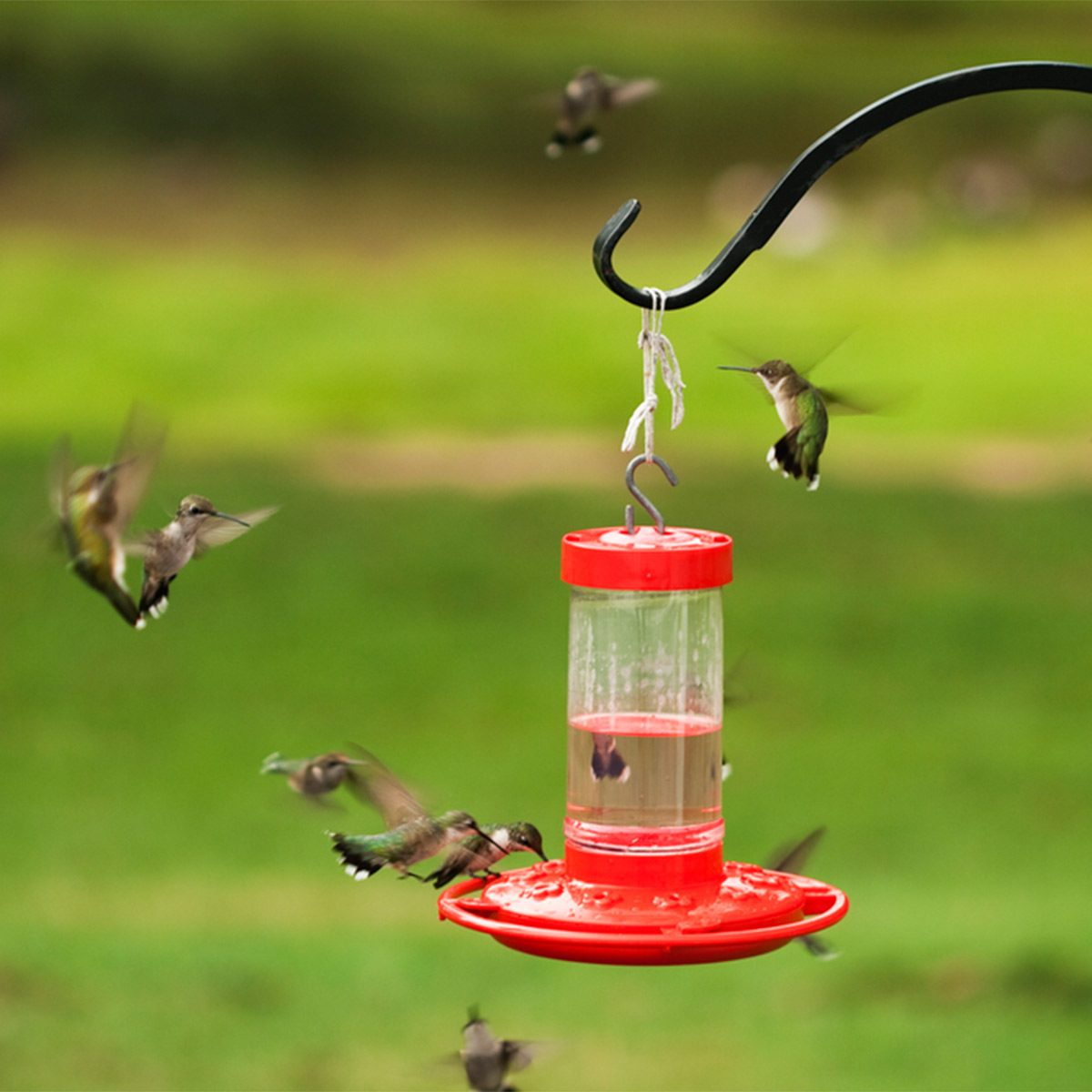 many hummingbirds fighting