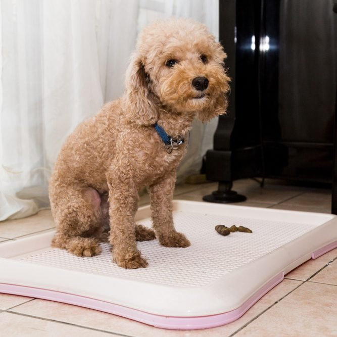Train Your Dog To Poop In A Specific Area