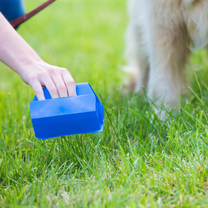 8 Genius Ways to Pick Up Your Dog Poop | The Family Handyman