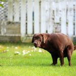 8 Genius Ways to Pick Up Your Dog Poop