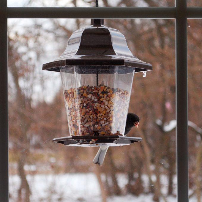 bird feeder close to window